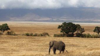 Tanzania Safaris Extensiones 2020