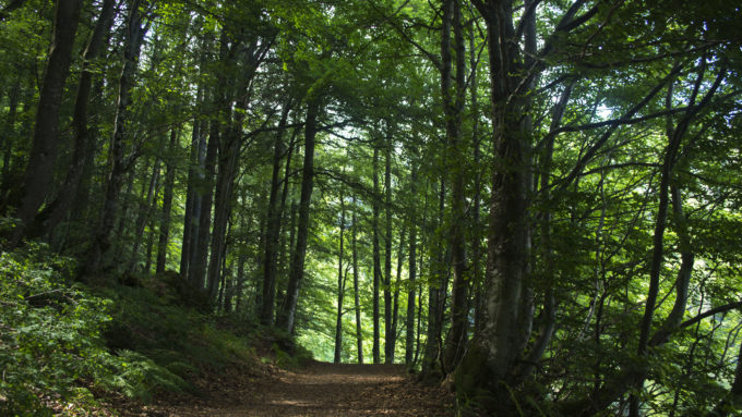 senderismo selva negra esencial