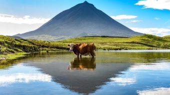 Senderismo Azores 4 Islas – Tercera, S. Jorge, Faial y Pico