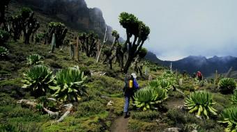 Trekking África