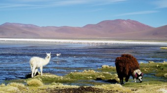 Trekking Bolivia