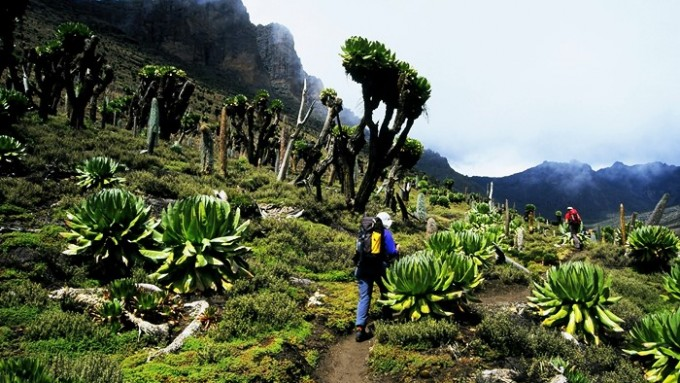 Trekking Monte Kenia
