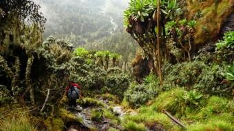 Trekking Rwenzori Uganda 2017