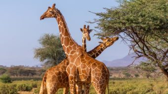 KENIA SAFARIS EXTENSIONES 2020
