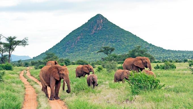 Kenia Safaris